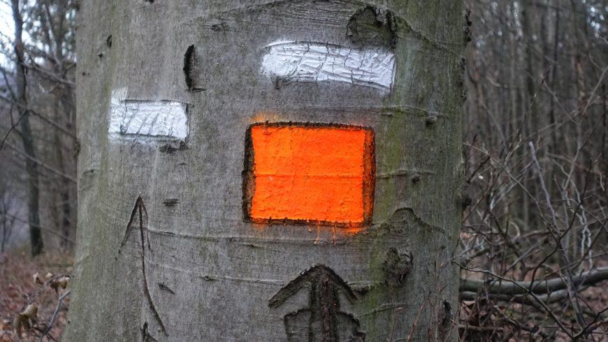 Nie je značka ako značka. Sú lesnícke značky užitočné?